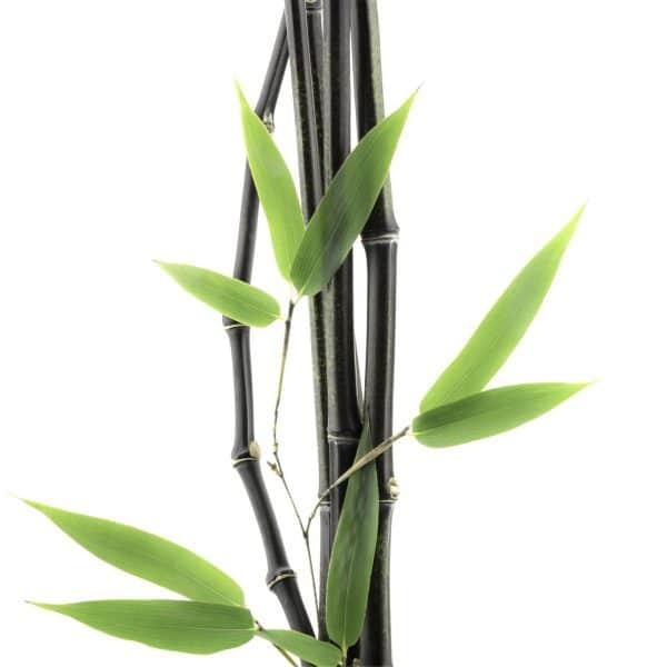 Air Wisp Barrel Black Bamboo
