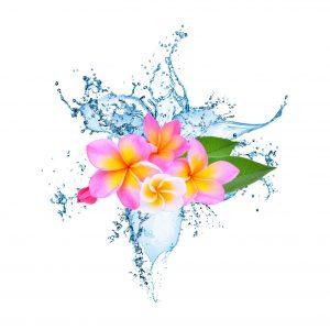 Aqua Flora Scentsia Fragrance