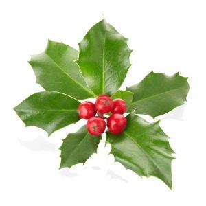 Mistletoe Home Fragrance Refill