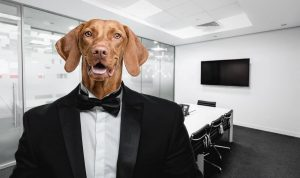 Dog At Workplace