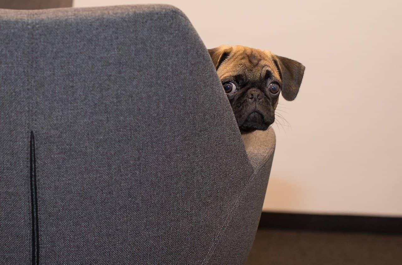 Workplace Pet Odor Control